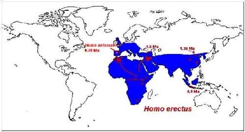 Les migrations d'Homo erectus entre – 1 800 000 et – 300 000.