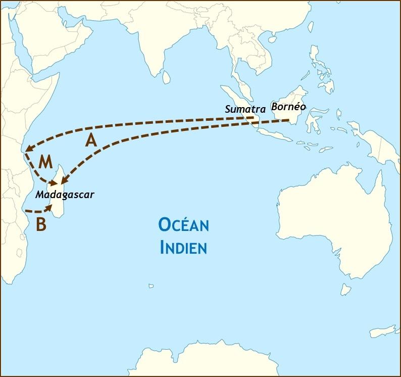 Figure 2 : Schéma de différentes hypothèses sur l'origine du peuplement de Madagascar. La migration proto-malgache est-elle d'origine austronésienne (A), bantoue (B), ou l'île a-t-elle initialement été peuplée par une population métisse austronésienne-bantoue qui se serait préalablement formée sur la côte orientale africaine (M) ? Figure adaptée de « Indian Ocean laea location map » de Tentotwo, Wikimedia commons, CC-BY-SA).