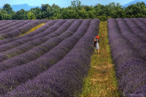 Illustration : marcovdz, «Purple Fields 1 », 23.06.2011, https://www.flickr.com/photos/marcovdz/5866430355/ (licence Creative Commons).